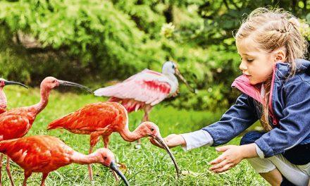 +beendet+ Verlosung einer Familienkarte für den Weltvogelpark
