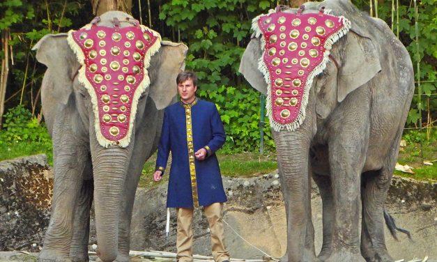 Gewinne: 2x 1 Familienkarte für Hagenbeck Tierpark Dschungel-Nacht