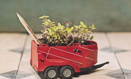 Umweltfreundlich: Sprout-Buntstifte, die sich in eine Pflanze verwandeln